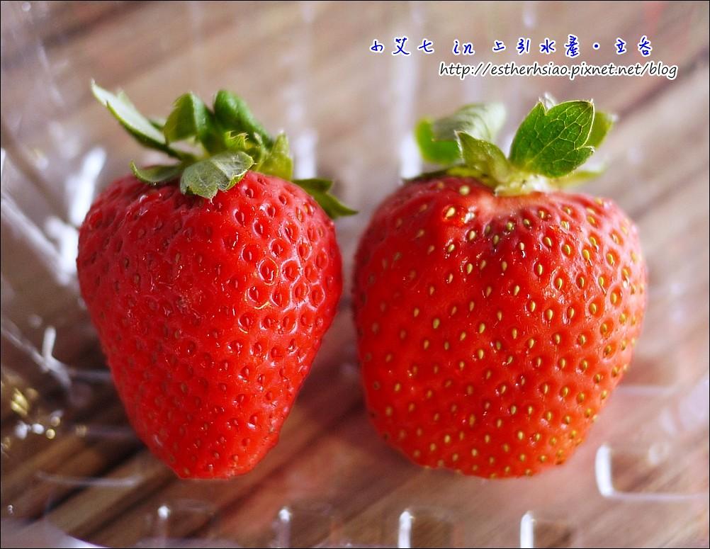 22 福岡草莓很大粒