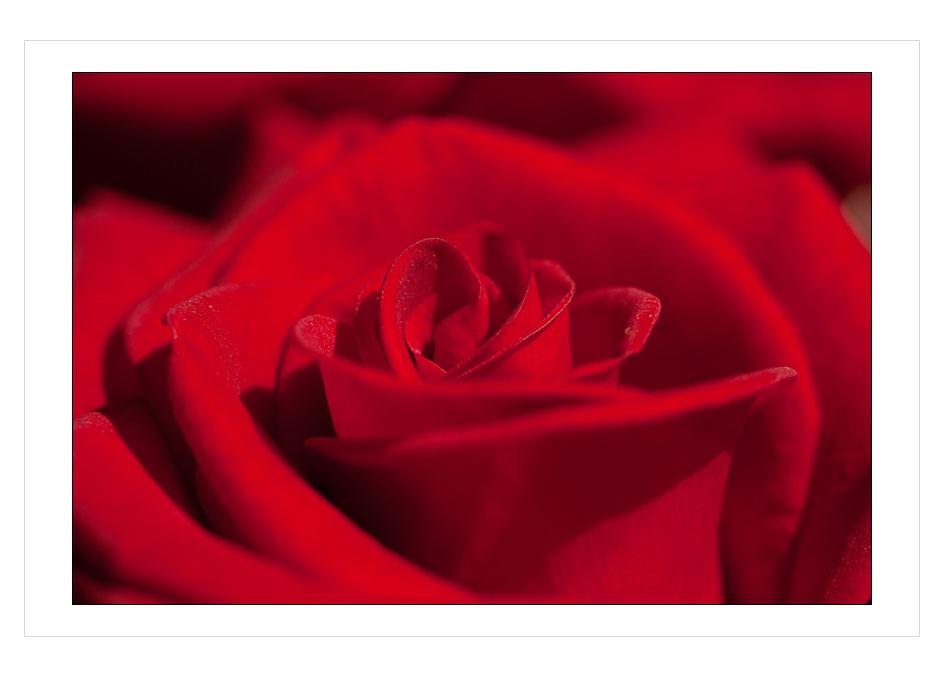 rosemakro1