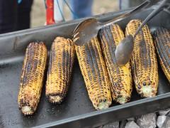 grilling(0.0), herring(0.0), fish(0.0), fish(0.0), seafood(0.0), sardine(0.0), smoked fish(1.0), corn on the cob(1.0), produce(1.0), food(1.0), dish(1.0), cuisine(1.0),