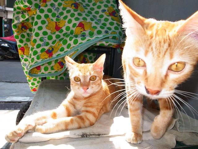 My Cats~~二張流
