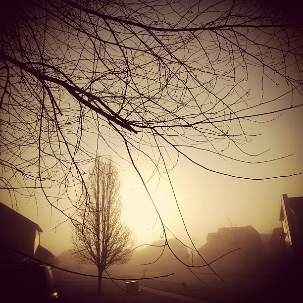 72/365+1 Foggy Start #morning #tree