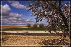 Pienso en un invierno pasado sombrío, pienso en un domingo de primavera radiante.