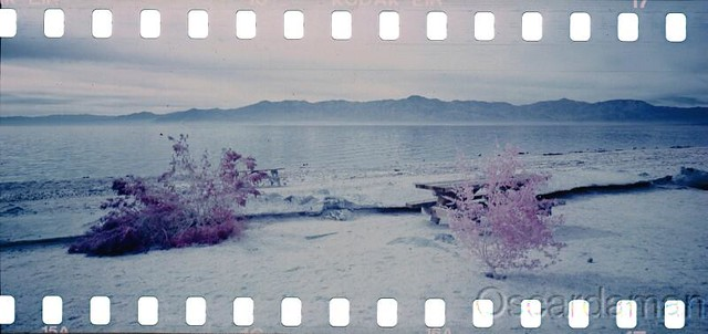 Peace and the Salton Sea