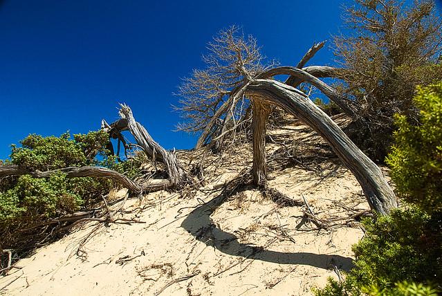 Vita tra le dune
