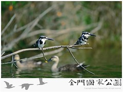 翡翠劇照-斑翡翠.jpg