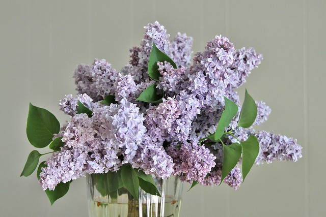 7861 my kitchen smells like lilacs