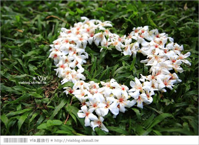 【桐花2014】南投油桐花景點~牛耳石雕藝術渡假村賞桐趣26