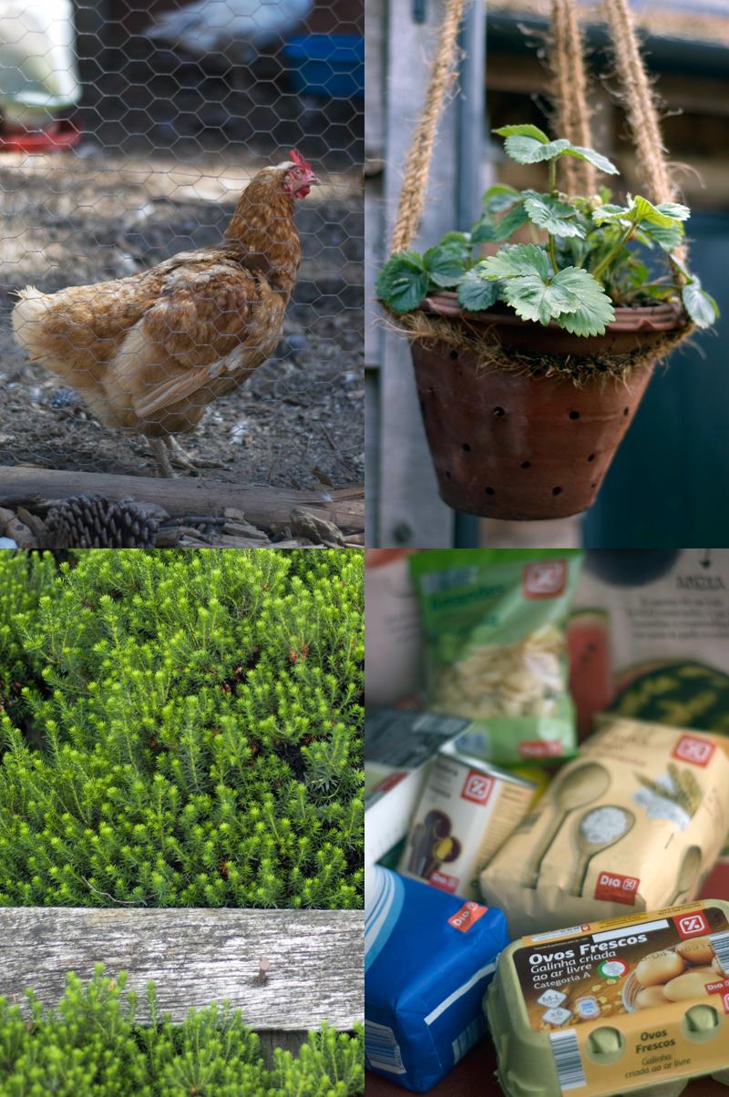 Ovos e galinhas criadas ao ar livre