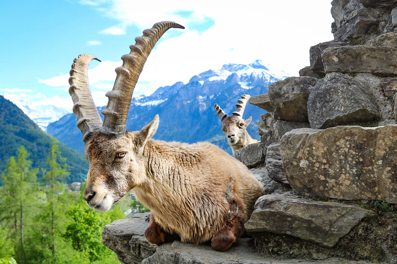 amazing attractions and things to do in interlaken ost and west