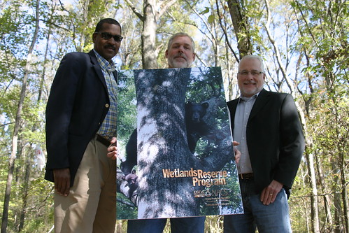 Farm Bill programs like the Wetlands Reserve Program have helped populations of the Louisiana black bear increase in Mississippi. Biologists estimate the state to be home to 120 black bears. Photos are by Brad Young, Mississippi Department of Wildlife, Fisheries and Parks.