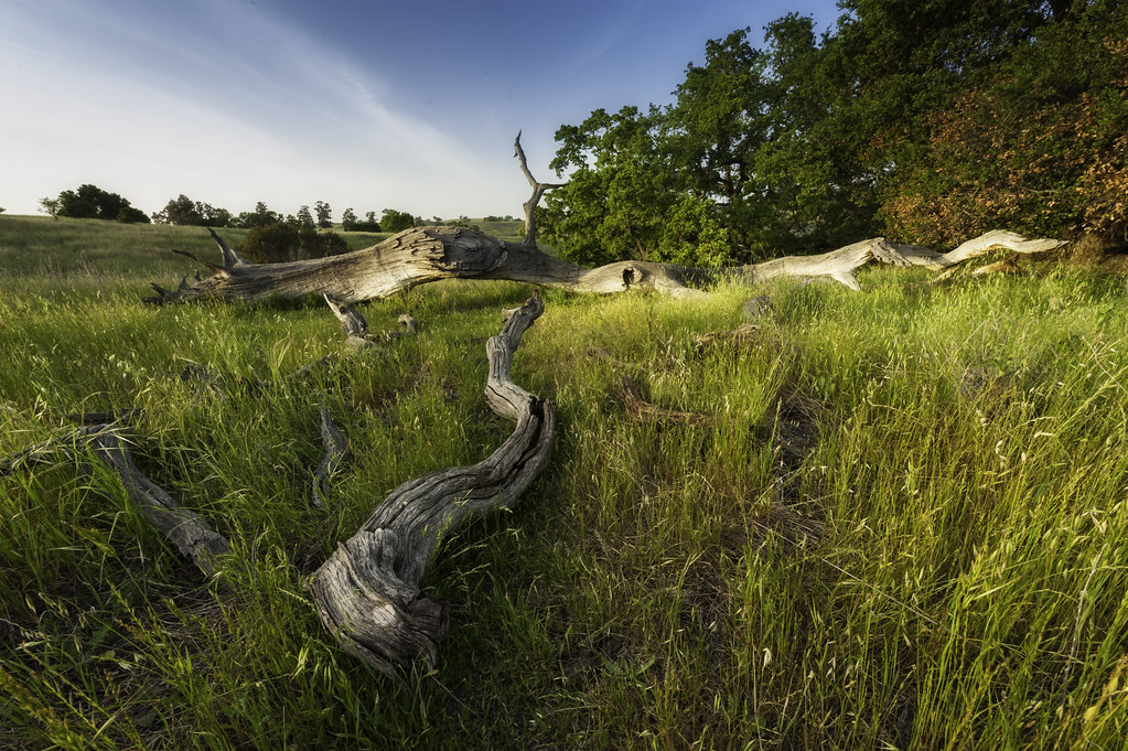 Arastradero Open Space Preserve