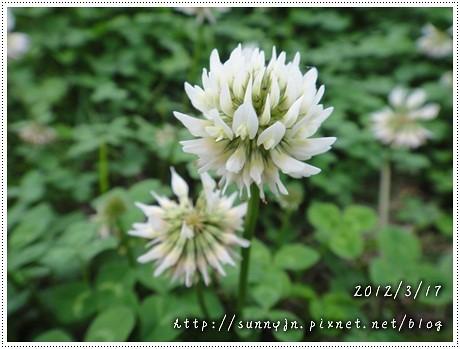 DSC04943.jpg