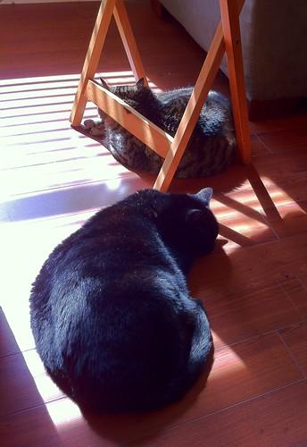 My Sunny Little Fur Lumps