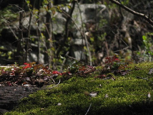 red leaves on green moss