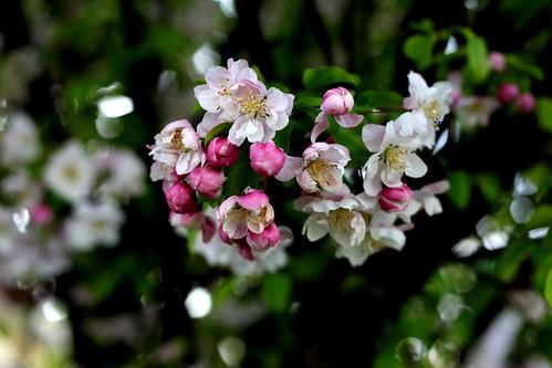 It's a Bloomin' Tree 3