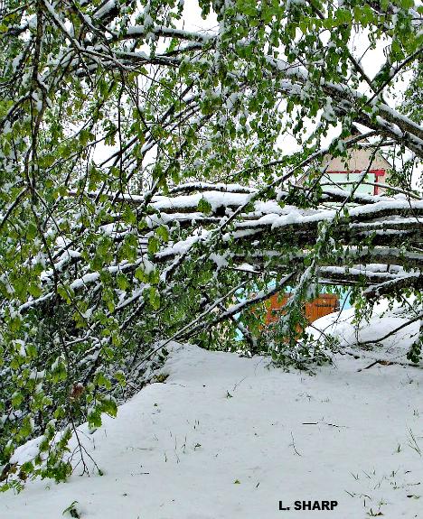 branches cassées et chutes d'arbres suite aux chutes de neige du 4 mai 2010 dans les Pyrénées météopassion