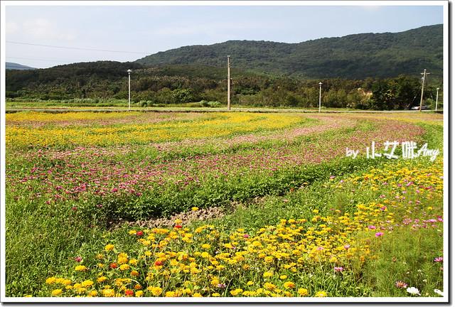 滿州花海IMG_1445