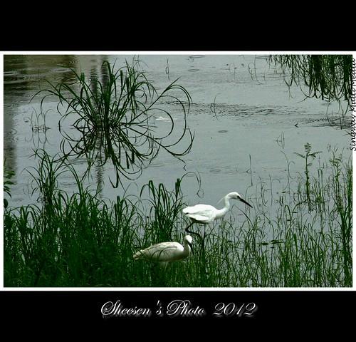 canoneos350d 田野 萬花筒 ef2xii ef70200mmf28lusm 後面 安南區 二弟家 20120520 鄉間的趣味 白鷺的天堂 雨後的下午 雨後的景色