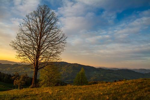 tree nature sunshine sunrise hills slovenia slovenija gora limbarska