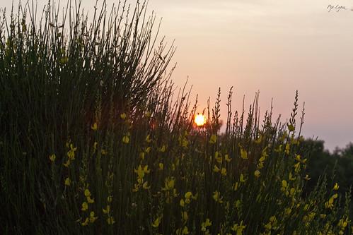 santa sunrise de dawn alba amanecer barbara dawning sant daybreak feliu ginesta albada buixalleu