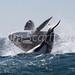 "Killer Whales (aka ""Orcas"")"