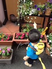お花が好きです(2012/6/2)