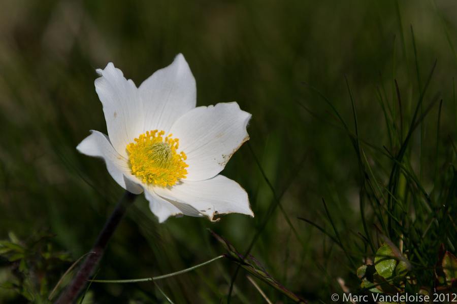 Sortie WK dans les Vosges, le wk du 26, 27 et 28 mai 2012 : Les photos - Page 2 7320914482_6d2fc3f419_o