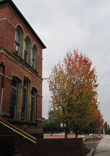 Gold Street Primary with autumnal trees 52/23/1 by Collingwood Historical Society