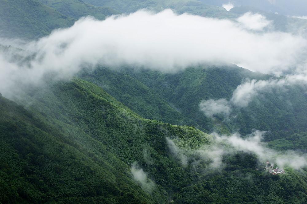 巨木群,與往拉拉山的路上-095