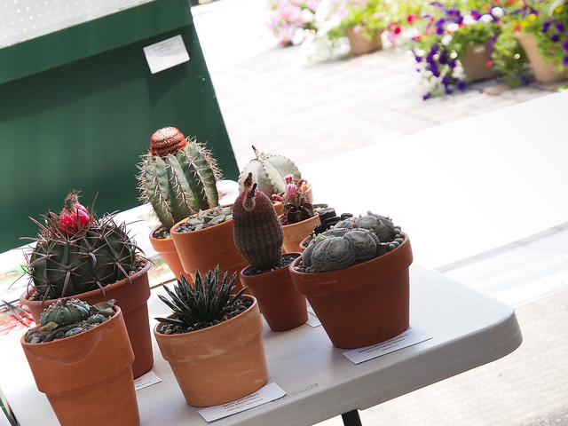 National Capital Cactus & Succulent Society