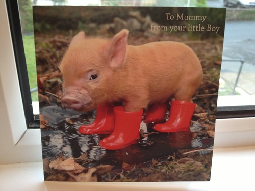 Pink piglet in wellies