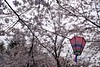 Photo:2014-03-29,鶴舞公園,名古屋 By rapidliner