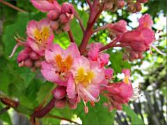 Lake Merritt flowers