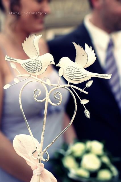 love_is_all_around_birds