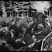 Large Warhorse by www.jamie-poole.com