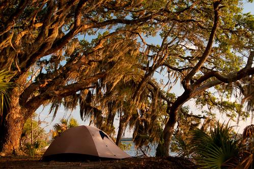 camping ga georgia coast windy tent liveoak spanishmoss campsite tentsite barrierisland cumberlandislandnationalseashore