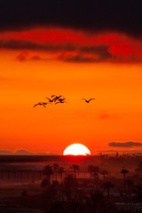 _MG_7973: Orange Sunset