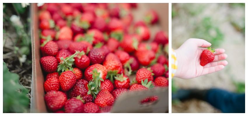 strawberries_008