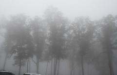 winter(0.0), snow(0.0), rain and snow mixed(0.0), frost(0.0), blizzard(0.0), freezing(0.0), fog(1.0), tree(1.0), drizzle(1.0), haze(1.0), morning(1.0), monochrome(1.0), mist(1.0),
