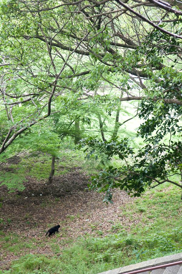 クロネコ|徳島中央公園