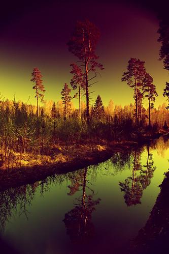 wood pine forest nd artscape graduatednd