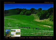 PASSEGGIATE A LEVANTE - VAL TREBBIA Narcisi al Pian della Cavalla 2 - ph Enrico Pelos