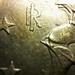 macrogota027 (moeda de euro)