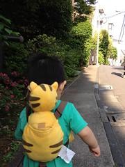とらちゃんと朝散歩(2012/5/27)