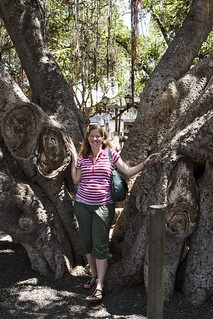 With the banyan tree