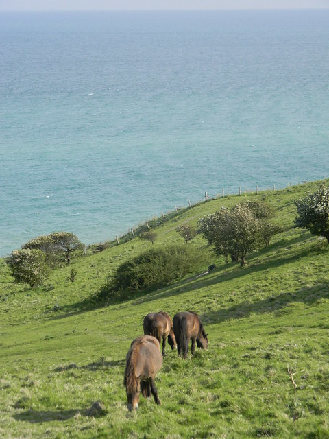 Horses grazing the clifftop