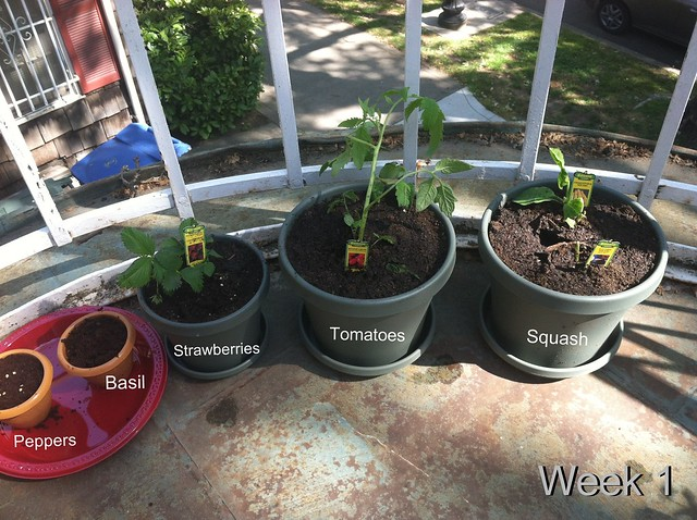 Veggies Week 1