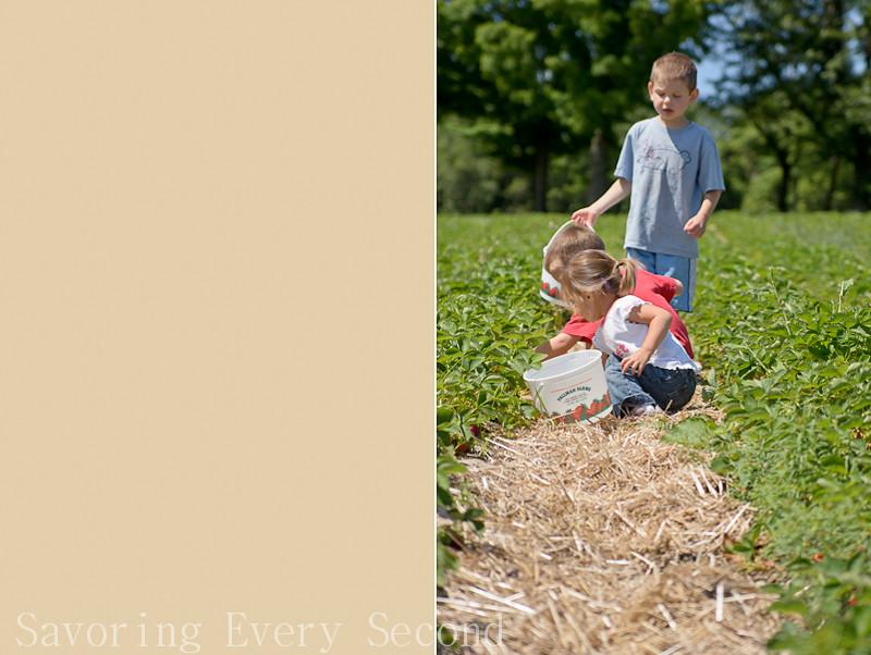 Strawberry Picking 1-016-Edit.jpg