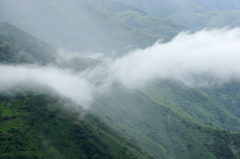 巨木群,與往拉拉山的路上-094