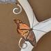 Migration-Monarchs4